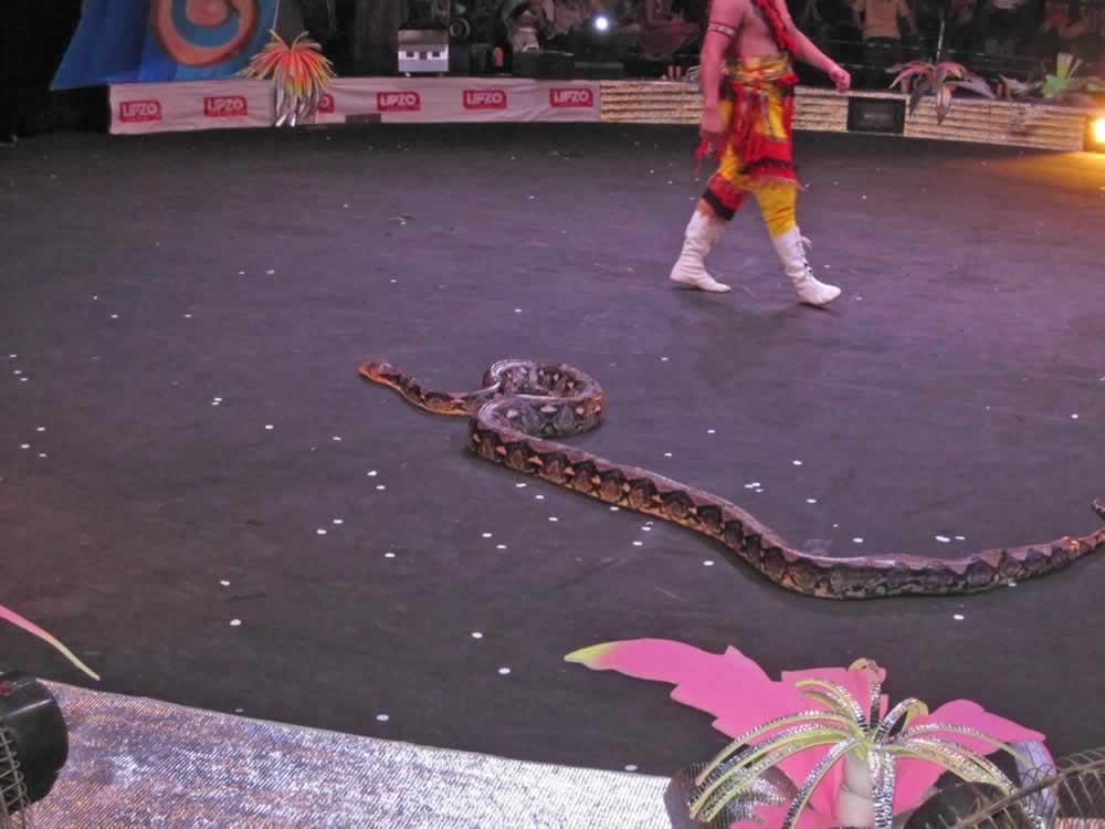IMG 8199 circus gala