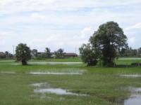Kampot051