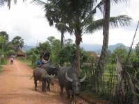 Kampot089 200x150 Kampot gallery